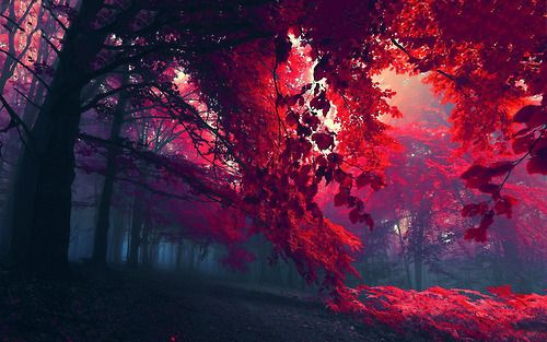 grafika red, tree, and forest