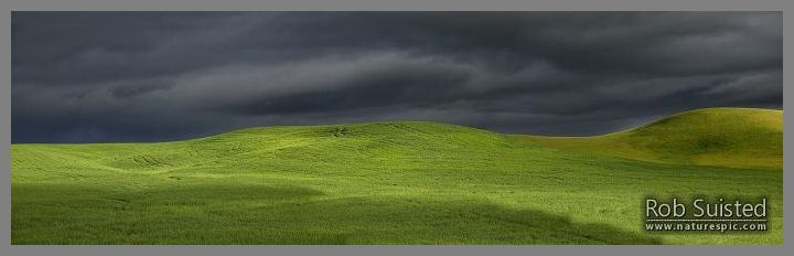 Dark moody stormy skies brewing with rainbow above lush summer grass farmland in Central Hawke's Bay.  Dannevirke.