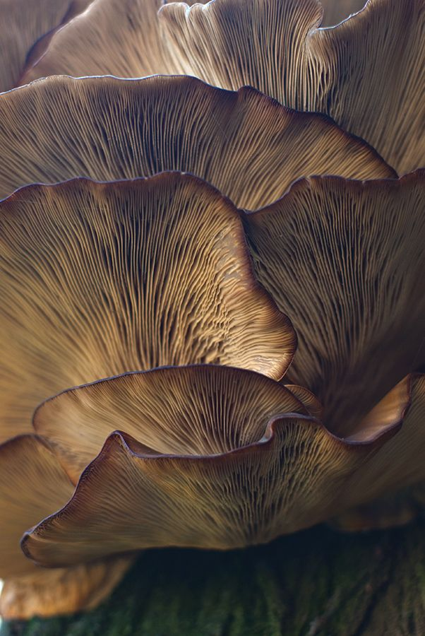 mushrooms - other world by Damir Omerović, via 500px