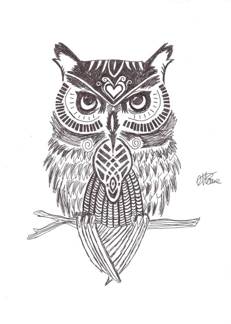 Owl drawing google search zeichnen pinterest eulen - Pinterest zeichnen ...