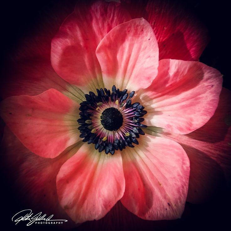 Macro of red flower power