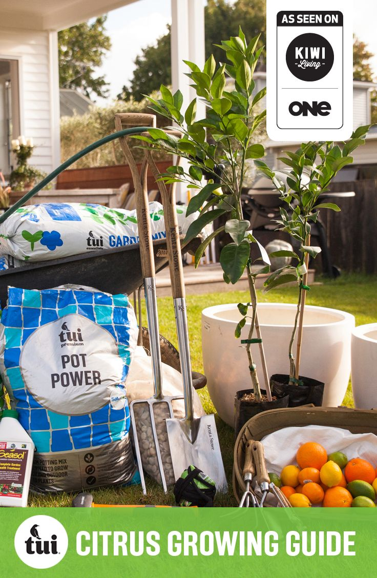 Tui Garden | Citrus Growing Guide #TuiGardenProjects