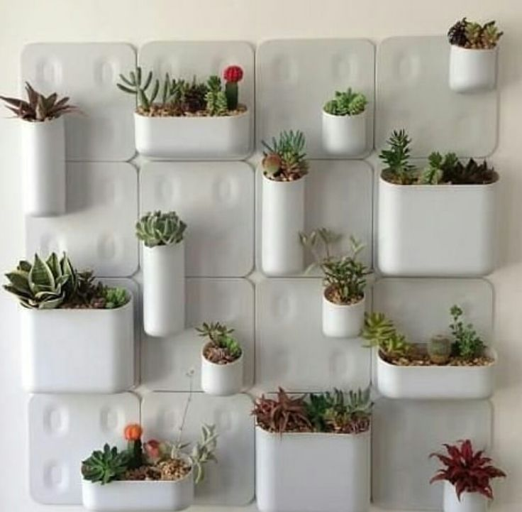 Create garden on Your house Walls..😊