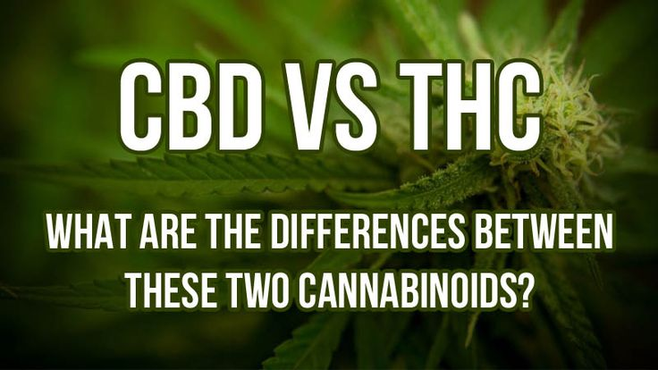 CBD Vs. THC: What Are the Differences Between These Two Cannabinoids?