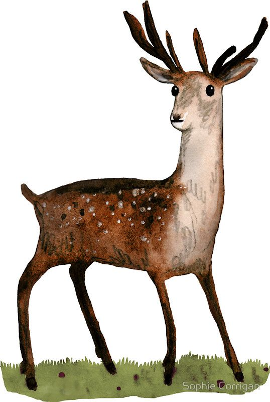 Deer in the woods sticker by sophie corrigan