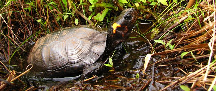 Efforts to alter ESA continue in 115th Congress | THE WILDLIFE SOCIETY