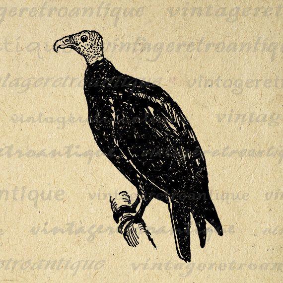 Buzzard Printable Image Digital Bird Graphic Download Illustration Vintage Clip Art Jpg Png Eps Print 300dpi No.1059 @ vintageretroantique.etsy.com #DigitalArt #Printable #Art #VintageRetroAntique #Digital #Clipart #Download