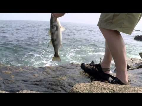 Striped bass top water mid day fishing! How to fish top water in the sun for striped bass. - YouTube