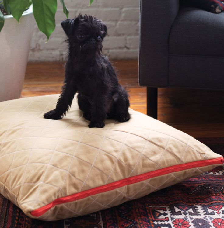 17 Best Ideas About Cute Dog Beds On Pinterest Dog Beds