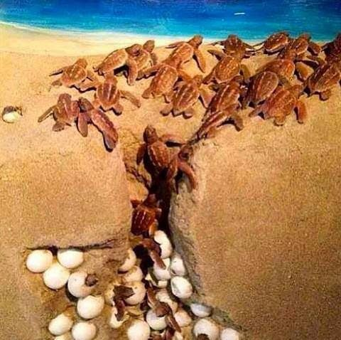 Sand with baby turtles hatching