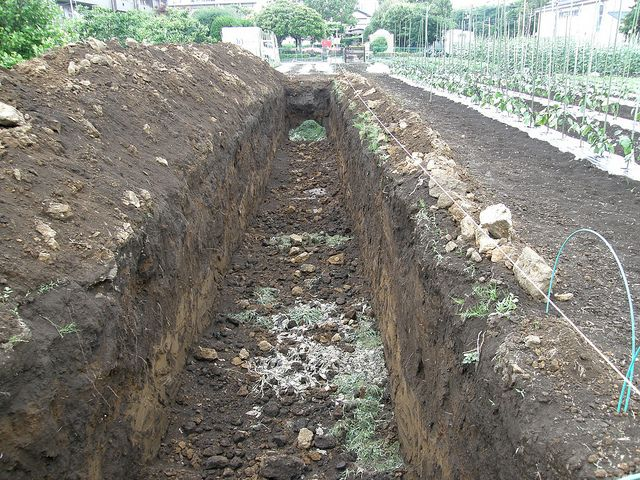 Trench Composting My Great Grandpa Did This Yor Years