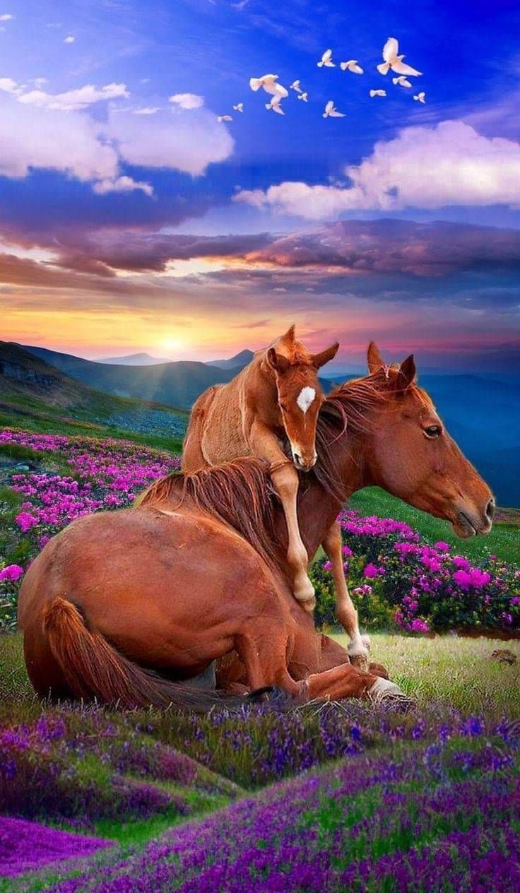 Pin By Carley On Horse Love Horses Pretty Horses Animals Beautiful