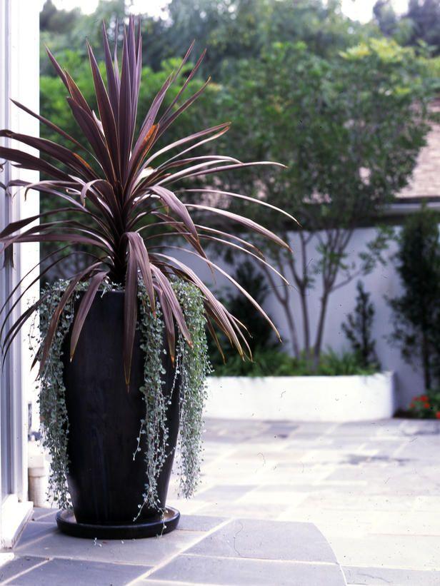 Best 20+ Potted plants ideas on Pinterest Potted plants patio - container garden design ideas