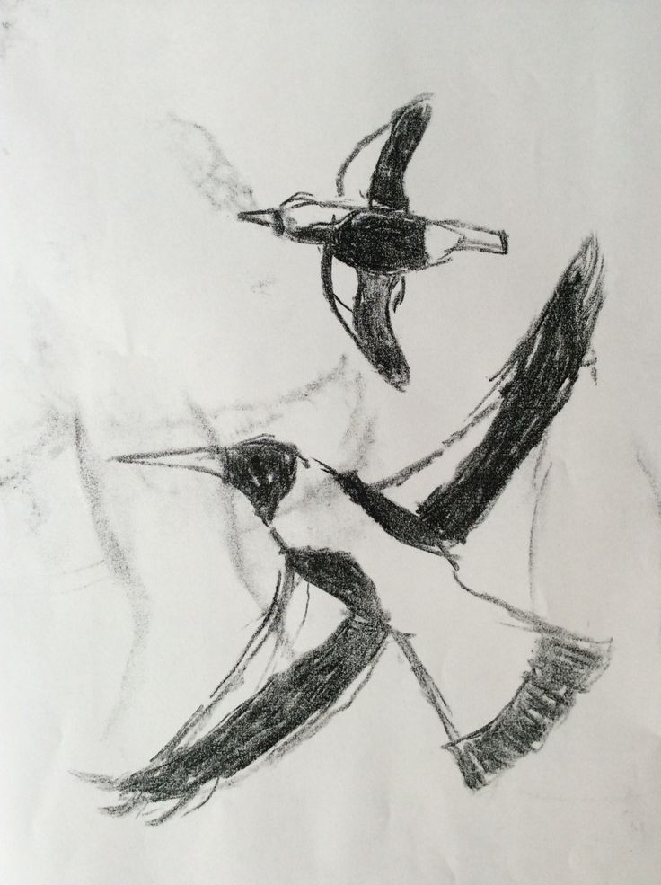 Charcoal drawing of Magpies.