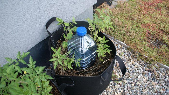 Arroser Ses Plantes En Vacances Au Secours Avec Images