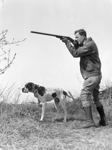 Upland Bird Hunter With Pointer Dog, Taking Aim Photographic Print by H. Armstrong Roberts at AllPosters.com