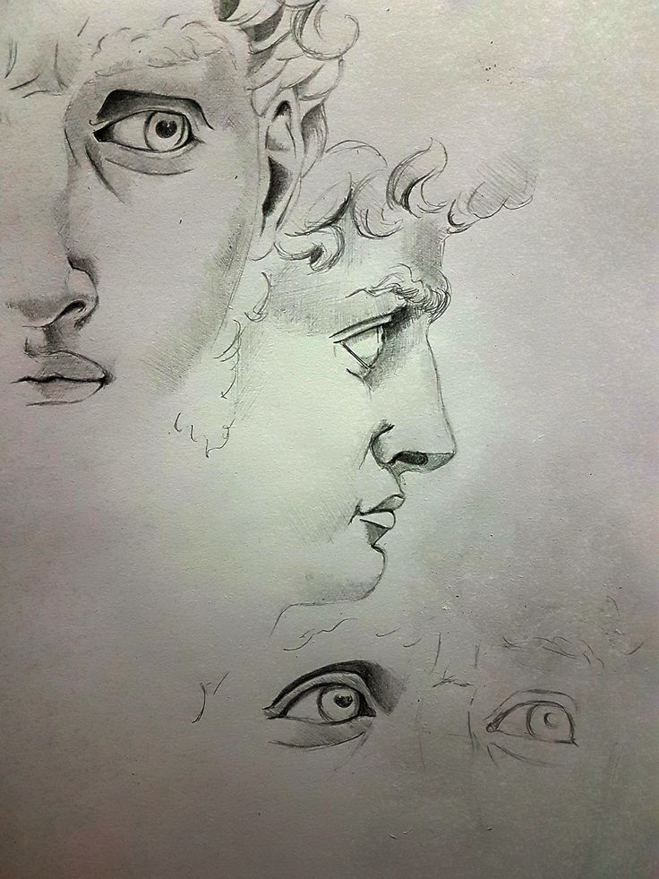 Studi David