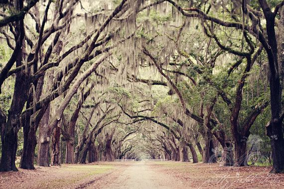 1000 images about art tree lined paths on pinterest for Landscaping rocks savannah ga