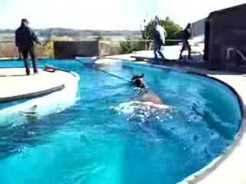 The 89 Best Images About Equine Pool On Pinterest Sharjah Pools And Pegasus