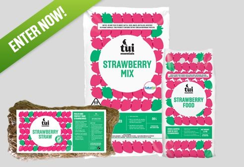 Tui Garden | Win a strawberry straw bale garden pack. Ends 23rd August 2017