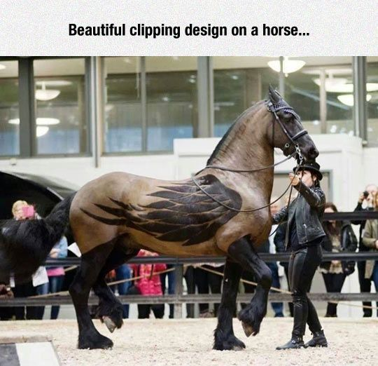 Fantastic clipping work - ACTUALLY FANTASTIC HORSE ...