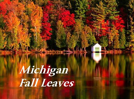 Image result for fall colors in michigan