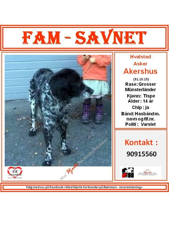 SAVNET : Hvalstad, Asker, Akershus (31.10.15) NAVN : Fam . . RASE : : Grosser Münsterländer . . FARGE : . . KJØNN : tispe . . ALDER : 14 år . . VEKT : . . CHIP : ja . . BÅND : halsbånd m.navn og tlf.nr. . . POLITI/FALCK/VIKING : varslet . .  KONTAKT : 90915560 . . HJERTEkontakt : Lucia 992 68 386 og Anne B: 92020142. . .