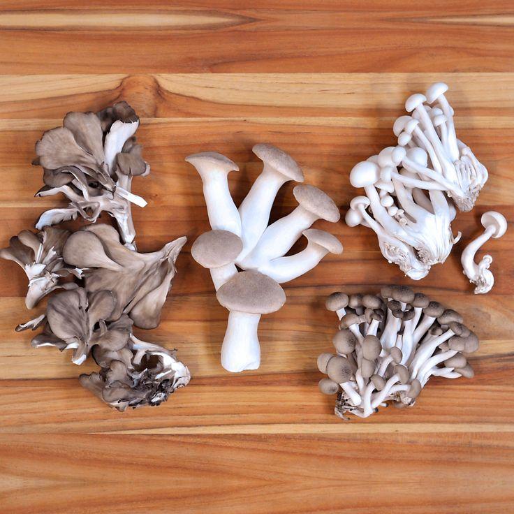 Mushroom Kit | Mushroom Farm | Mushroom ... - Back to the Roots