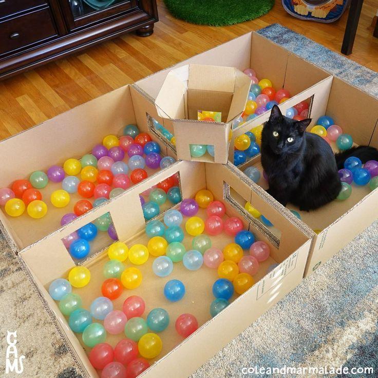 Cat Ball Pit … Ok, ich verstehe, dass diese Pers…