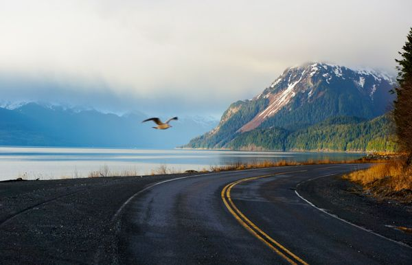 Eagle flying over the road Alaska