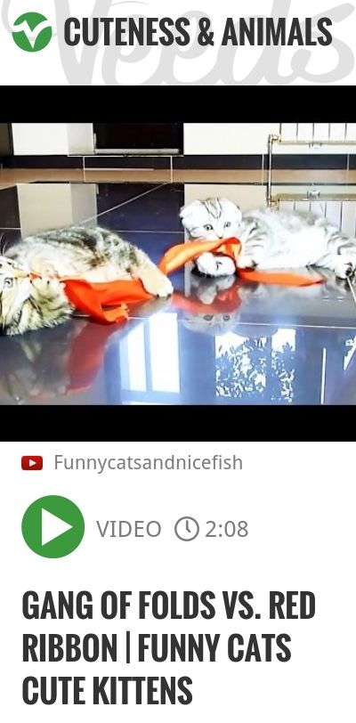 Gang of Folds vs. red ribbon   Funny Cats Cute Kittens   #kätzchen #katzchen   http://veeds.com/i/qkWY-P6PY68p1whz/cuteness/