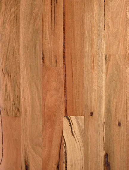 Timber Swatches, Brushbox, French Oak, Spotted Gum Perth