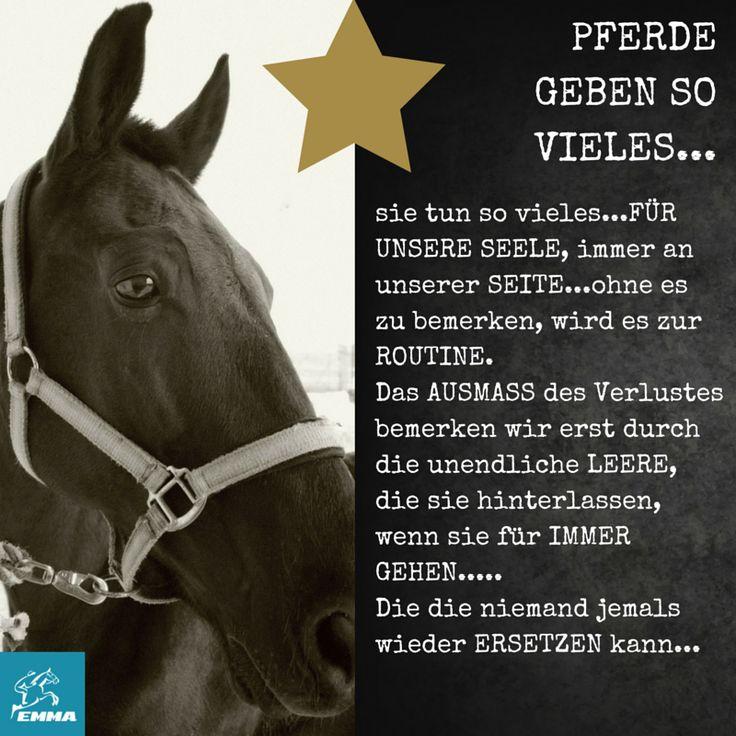 17 best ideas about pferdesprüche on pinterest | pferde, pferde