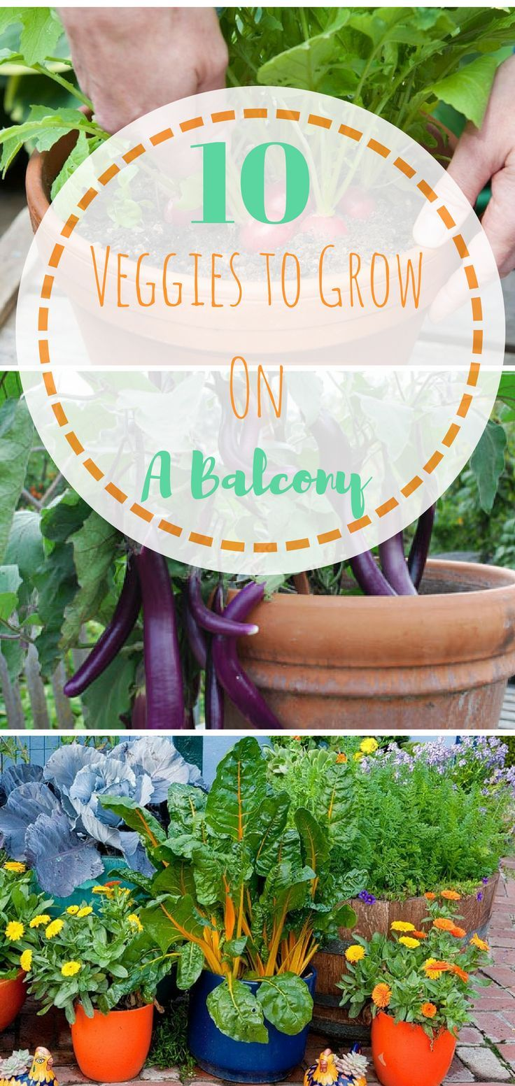 25 best ideas about small balcony garden on pinterest balconies apartment balcony garden and - Vegetable gardening in small spaces image ...