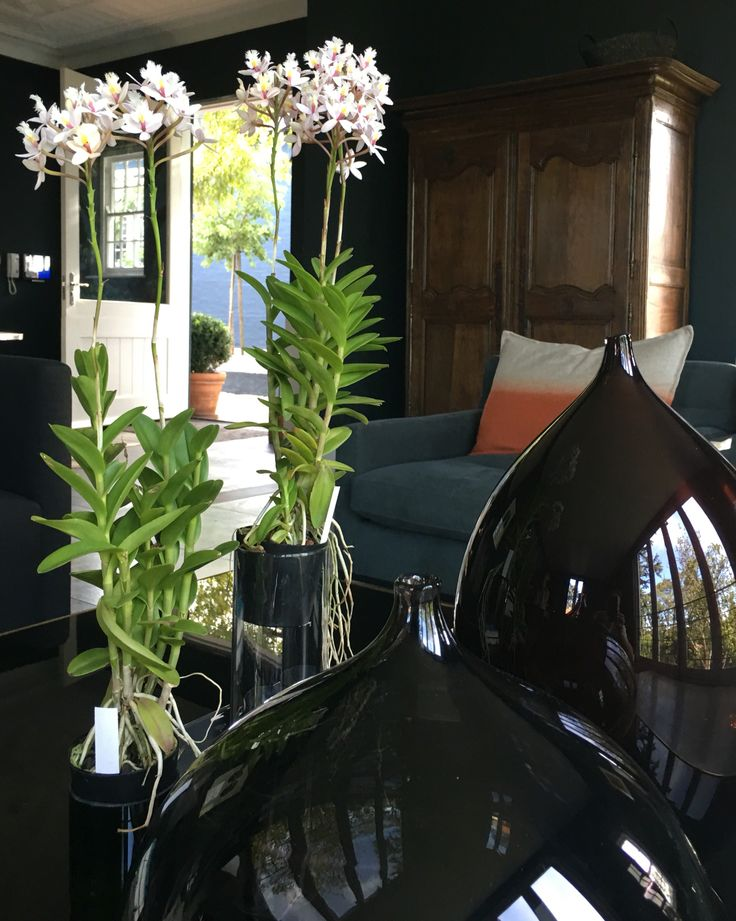 Lounge with orchids