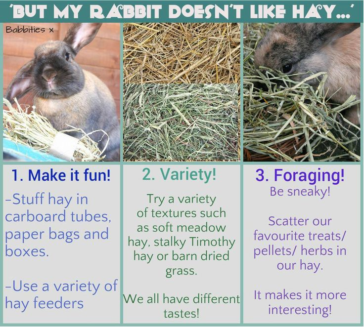 Tips to get your bunny to eat more hay. (05/11/14)