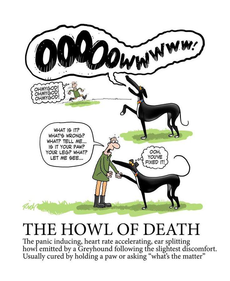 """Also known as """"GSOD"""" Greyhound Scream of Death!"""