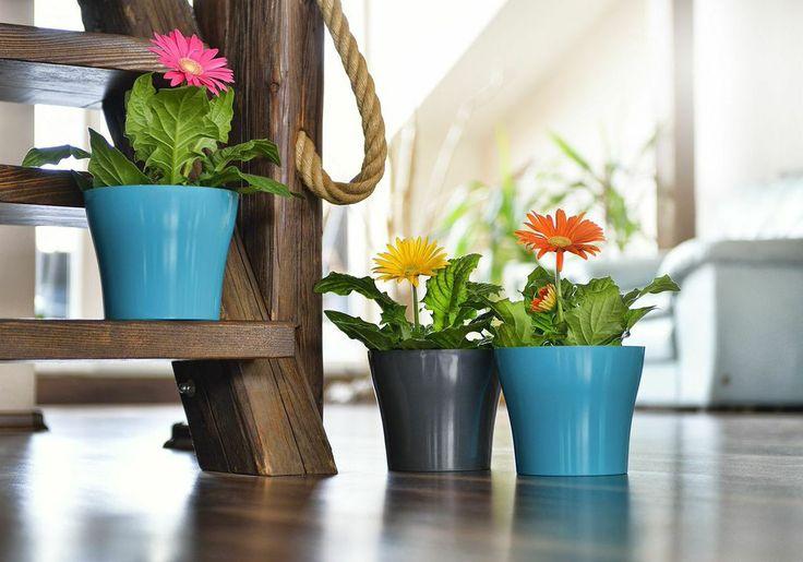 Decorative flower pot Tulipan.