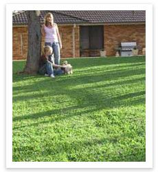 Sir Walter Turf Supplier - http://www.buffaloturf.com.au.