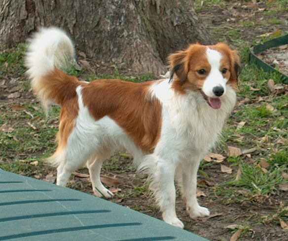 Best Natured Dog Breeds