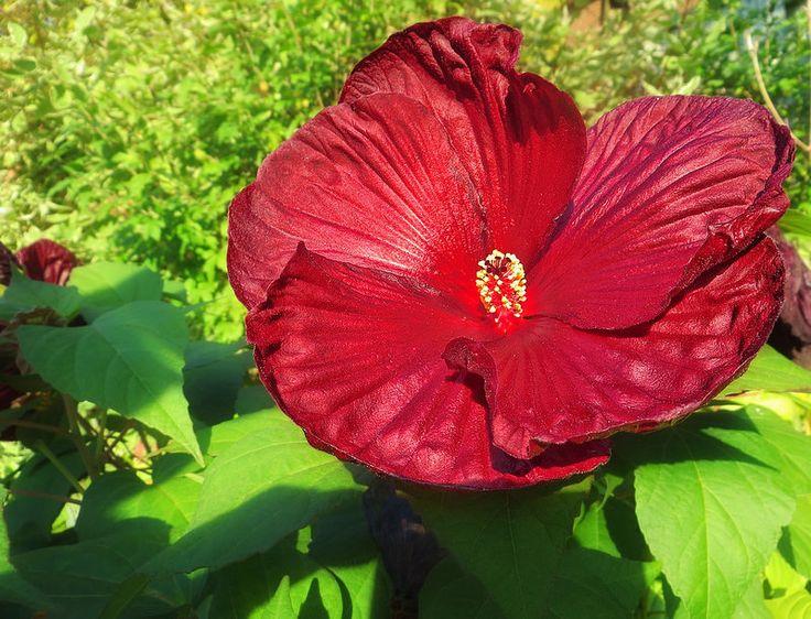Fall-Flower