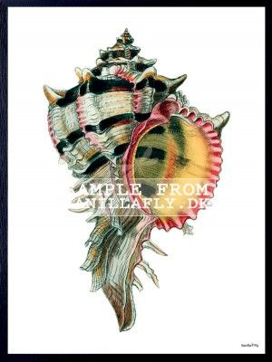 POSTER GREY/BLACK CONCH 4 (3-pack) #PSC110