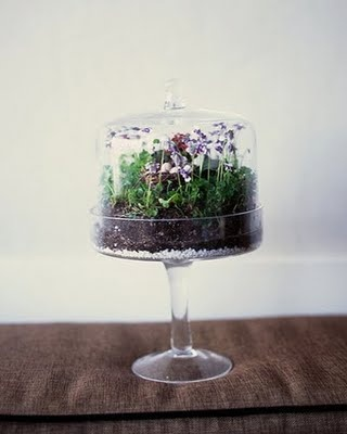 Terrarium tutorialIdeas, Green Thumb, Gardens Decor, Little Gardens, Stands Terrariums, Cake Stands, Cake Display, Carnivorous Plants, Cake Plates