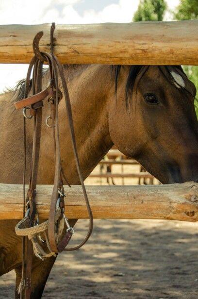 * Experiencia con caballos / doma natural *