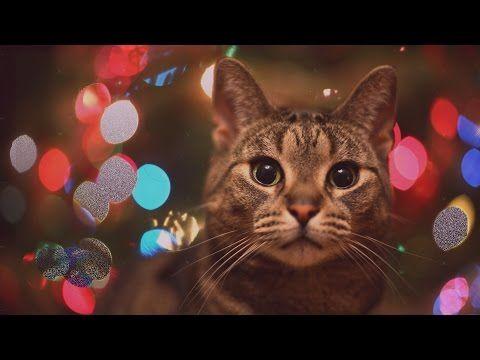 Holiday Gift Ideas Under 50 Christmas Cats Cat Wallpaper Kitten Wallpaper