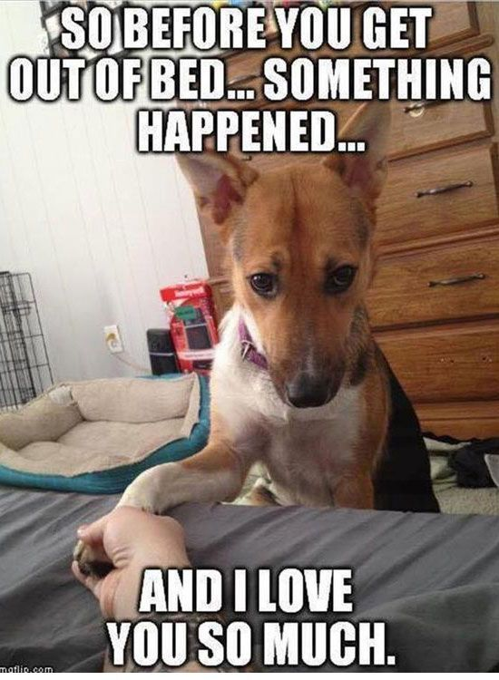 Before You Get Out of Bed - Funny Animals with Captions LOL
