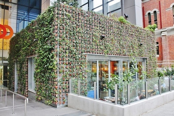 Restaurant in Perth covered with pots of ivy and strawberries 2012