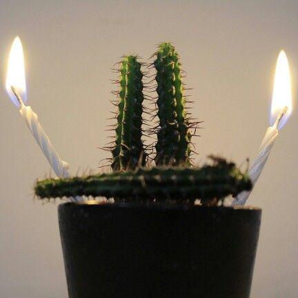 Amazing kaktus