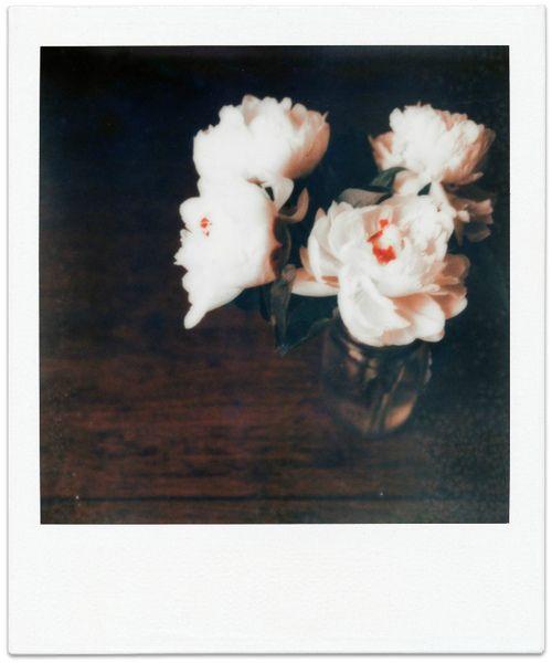 polaroid white roses