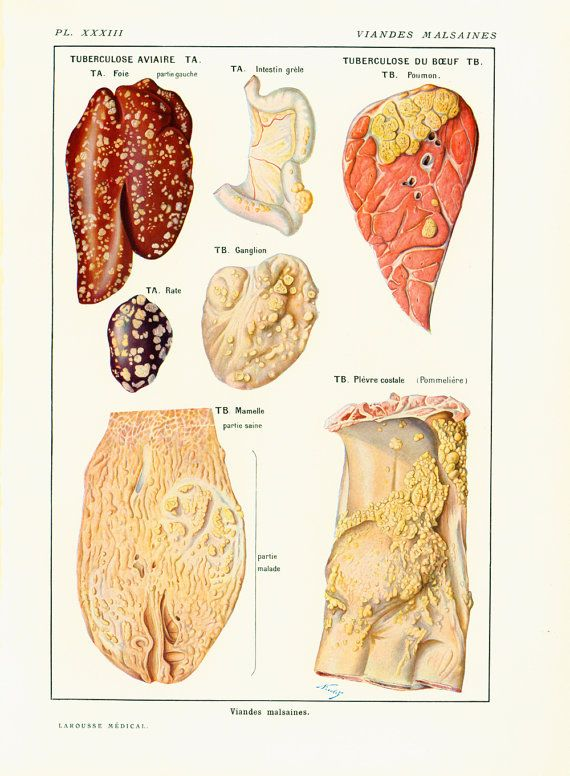 1912 Unhealthy meats Antique veterinary course by sofrenchvintage